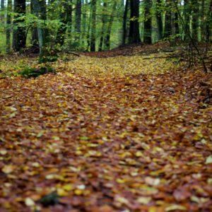 Voděradský podzimní kurz