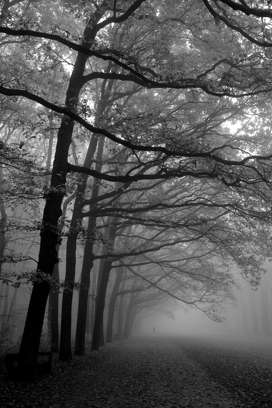 Mlha v oboře Hvězda