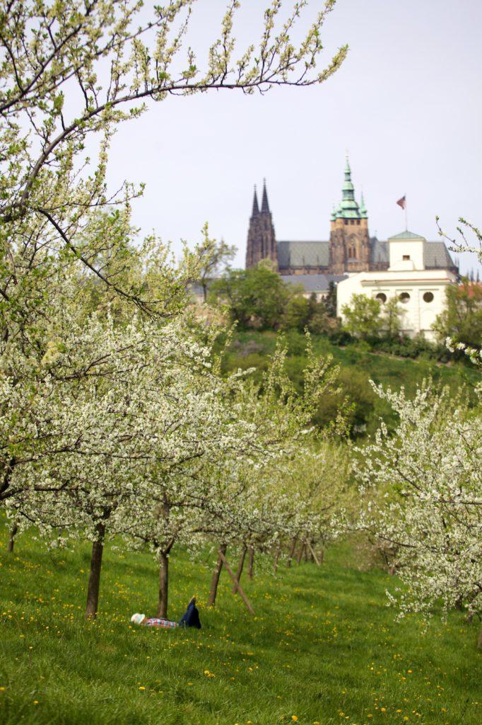 Fotokurz v rozkvetlé Praze