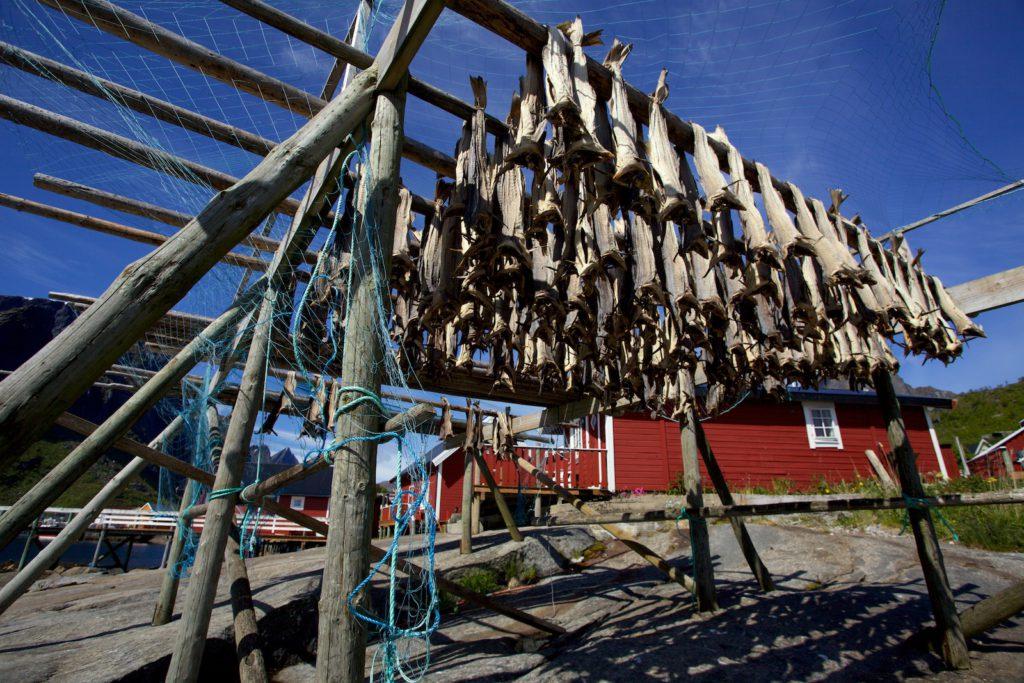 Sušení ryb na Lofotech