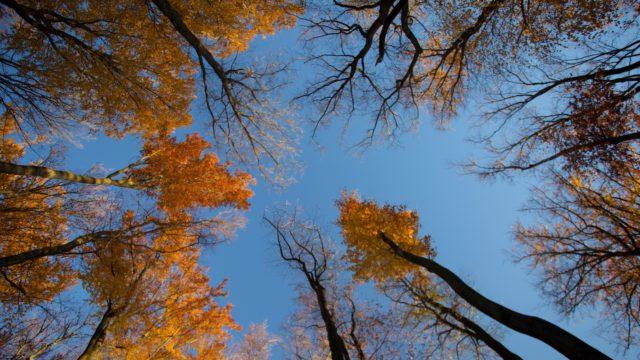 Podzimní kurz ve Voděradských bučinách